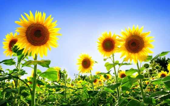 hoa, hương, dụng Фон № 113903 разрешение 1920x1200