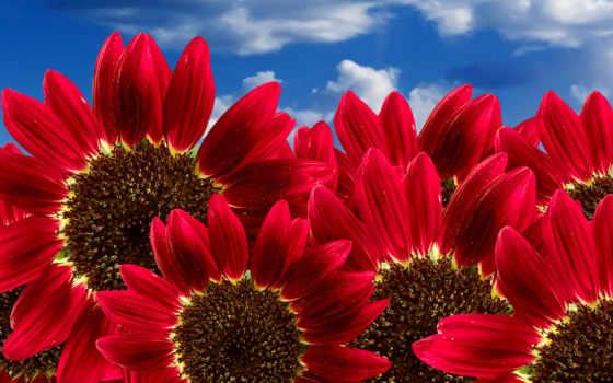 desktop, sfondi, primavera, high, red, flowers,