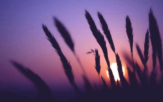 cvety, поле, вечер