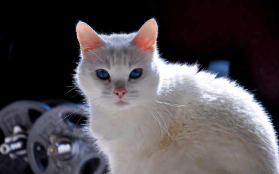 zhivotnye, cats, кошки