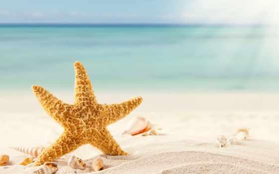 морская, star, море, песок, ракушки, пляж, tropics,
