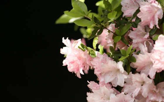 flowers, цветы Фон № 32824 разрешение 1920x1200