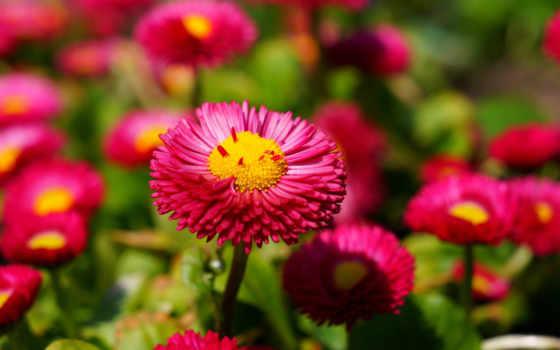 flowers, best, розовый
