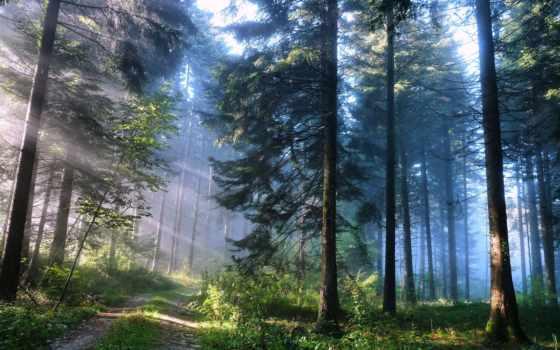 природа, лес, дорога, trees, свет, широкоформатные, пейзажи -, высоком, качестве,