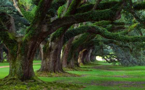 природа, summer, trees, весна, трава, лес, дек, летние, старые, весенние, park,