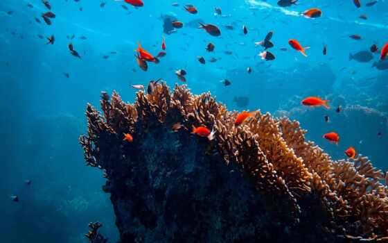 вертикальный, под, море, fish, coral, royalty, swimming, фото, small, shoot