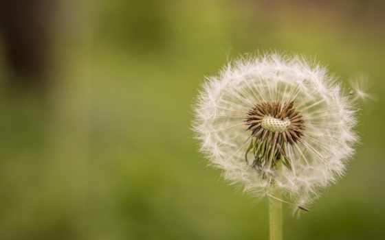 весна, цветы, природа