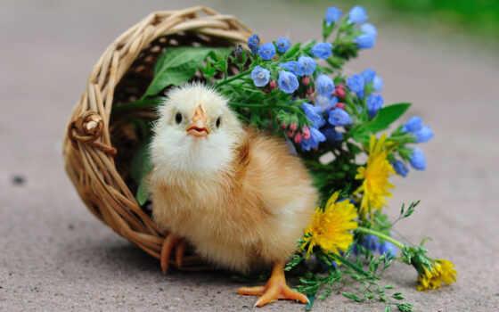 цветы, корзина, птица