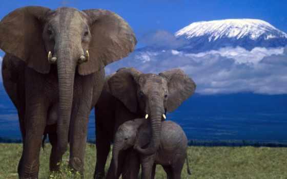 слон, zhivotnye, слоны