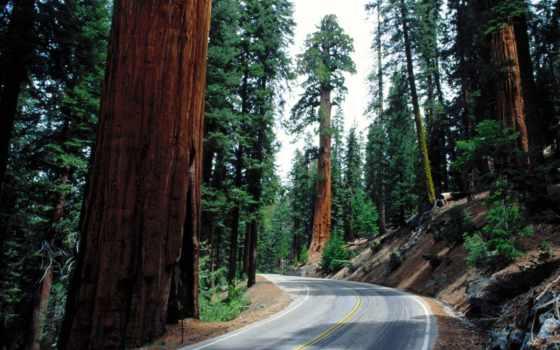секвойя, самых, деревьев, дерево, секвойи, планеты, другие, нашей, eti, удивительных, гиганты,