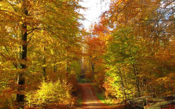осень, дорога, картинка