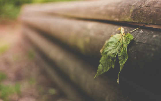 miscellaneous, листья, природа, high, cool, качество, wood,