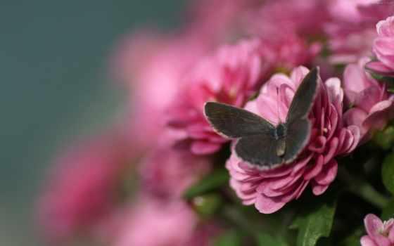 качества, хорошего, красивые, cvety, цветов, телефон, широкоформатные, оригинал,