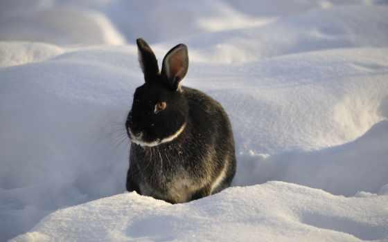 ван, зимой, winter, кролик, кроликов,