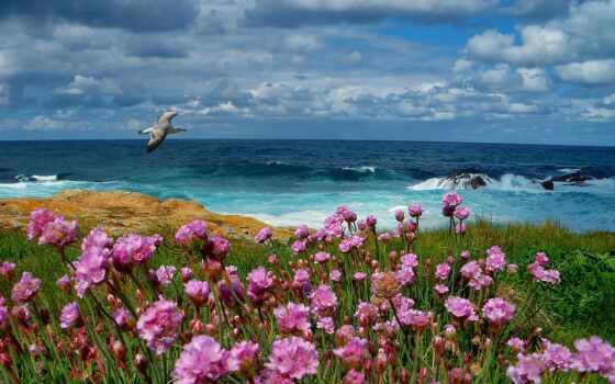 море, чайка, цветы