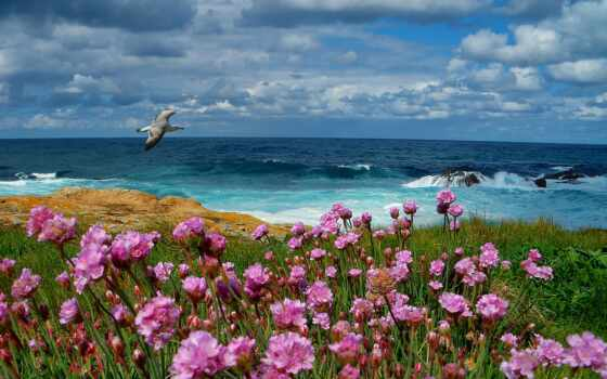 море, чайка, цветы, пейзаж, небо, iphone, облака, drop,