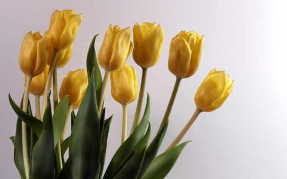 amarillas, flores, девушек
