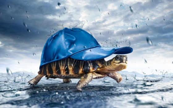 черепаха, под, дождь