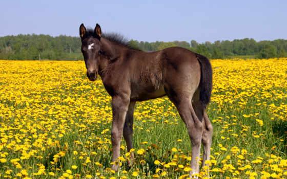 лошадь, жеребенок, поле