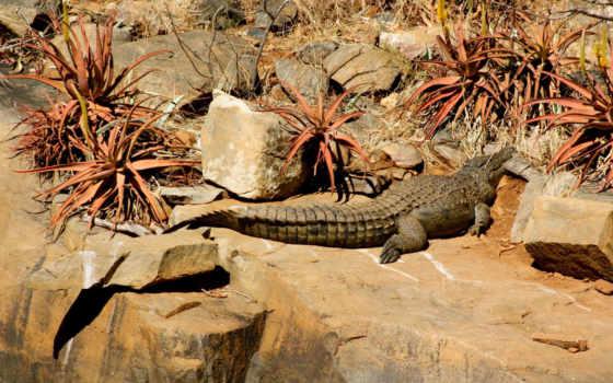 крокодил, камни, растения, лежит