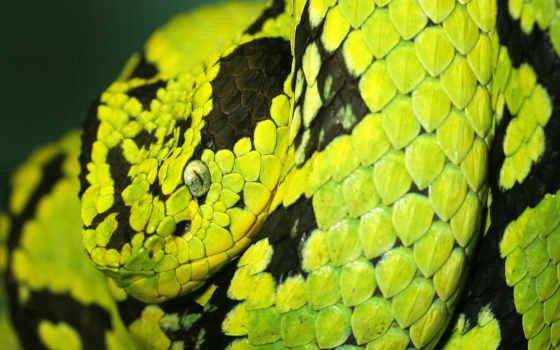 змеи, красивые, snake