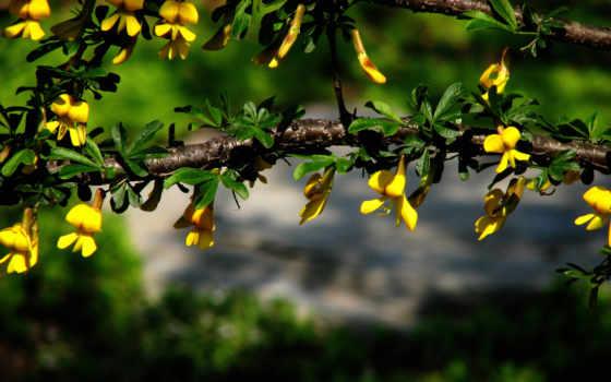 красивые, природа, дерево, макро, цветки, красивых,