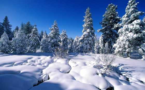 снег, pine, winter, trees, drift, prev