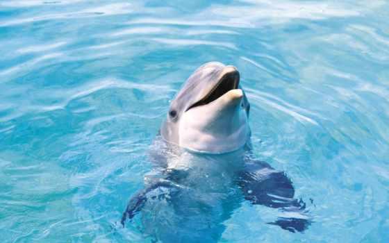 wallpaper, дельфин