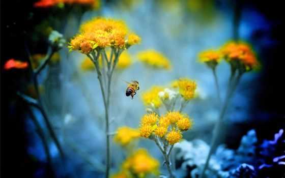 macro, цветы, пчела
