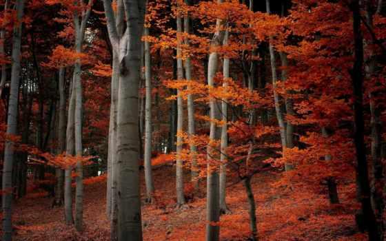 листья, осень, природа