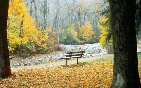 красивый, осень