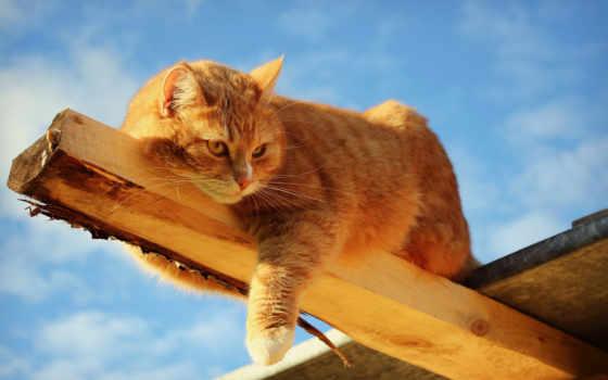 кошки, считались, рыжие