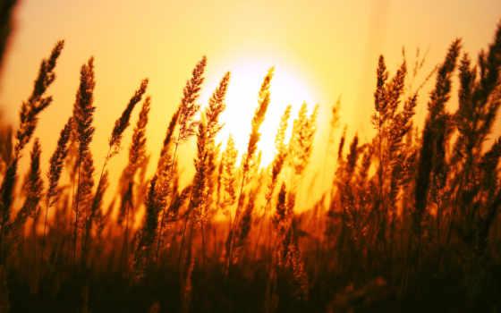 rising, солнца, со