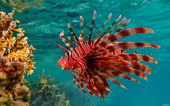 underwater, world, заставки, аквариум, рыбки, фоны, fish, главная, заставка, фотографий,