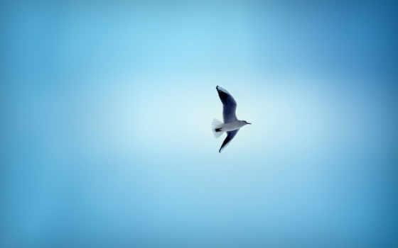 чайка, птица, zhivotnye, небо, птицы, полет, красивые, небосвода, голубые, дали,