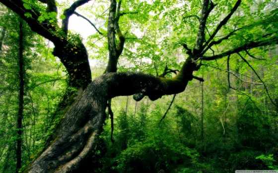jungle, дерево, зелёный, мох, лианы, природа,