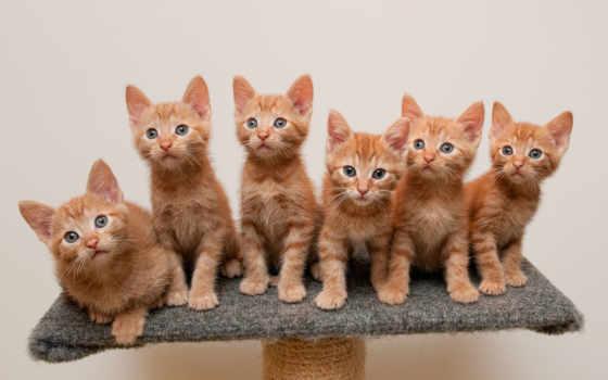 котята, рыжие, кошки