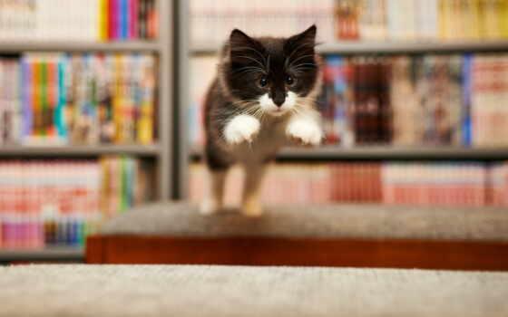 кот, animal, прыжок, лапа, mobile, телефон, free