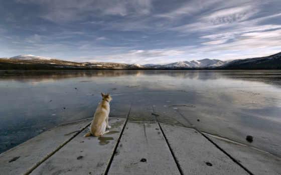 озеро, собака