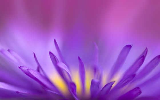 цветы, фиолетовый, великолепные