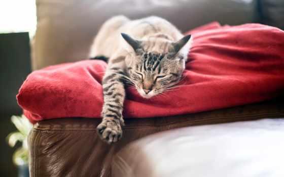 кот спит на диване Фон № 64500 разрешение 1920x1200