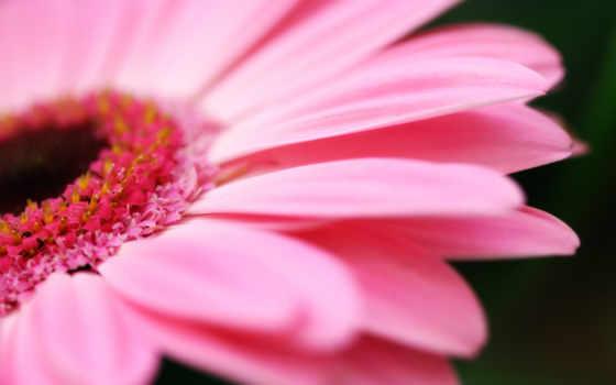 красивых, самые, красивые, прекрасные, cvety, восхитительные, театр, цветов,