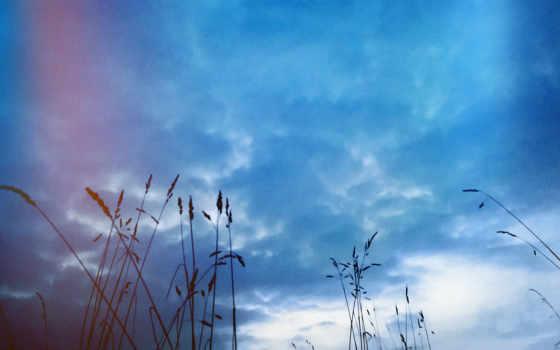 , трава, небо, вечер,