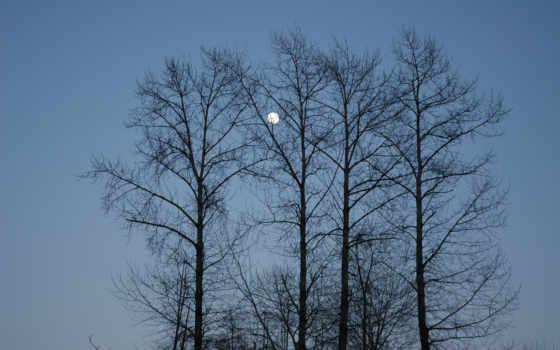 отлично, природа, фон, landscape, небо, вечер, луна,