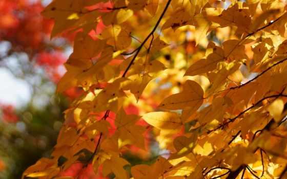 осень, листва, trees, дерево, many, crown, янв, природа,