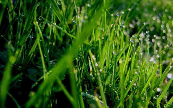 трава, фон, роса