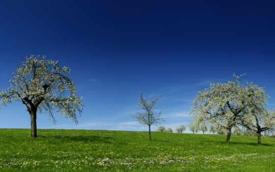 landscape, зелёный, trees