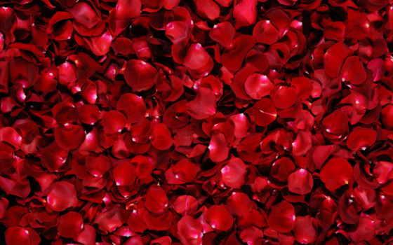 лепестки, роз, купить, розы, фотообои, фотопанно, доставка, доставкой, беларуси, фотообоев, цене,