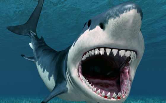 sharks, акула, marine, eggs, predators,