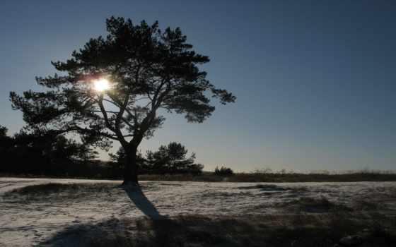 rays, дерево, sun, дек, море, осеннее, зимняя, осень, свет, природа,
